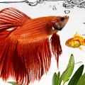 "Webdesign zum Thema ""Aquarium Pflanzen"""